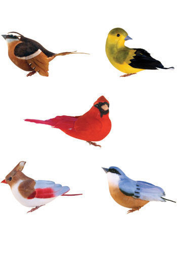 Birds of a Feather Magnet Set