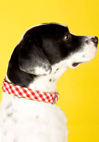Picnic Pup Dog Collar - Red, White, Checkered / Gingham