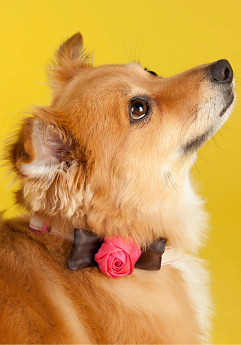 Rose Bud-dy Dog Collar - Pink, Brown, Bows, Flower