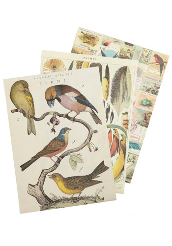 Remains to Be Scene Paper Set in Aviary by Cavallini & Co. - Multi, Print with Animals