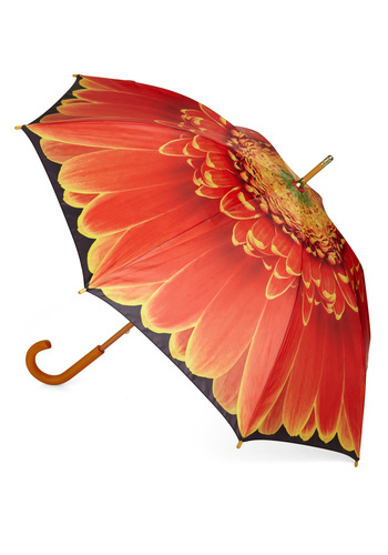 Flower Showers Umbrella - Orange, Flower, Film Noir, Spring