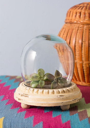 Plant and Simple Terrarium - Cream, Dorm Decor, French / Victorian, Handmade & DIY