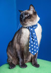 See Spot's Style Pet Tie - Woven, Blue, Menswear Inspired, Quirky, Cats, Good, Polka Dots