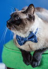 Fur-st Mate Cat Collar - Woven, Blue, Menswear Inspired, Quirky, Cats, Good, Novelty Print, Nautical