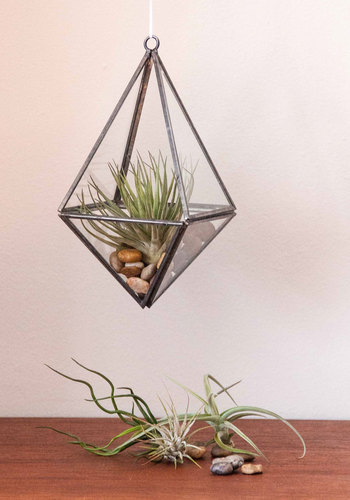 Gem of a Garden Terrarium - Multi, Dorm Decor, Urban, Good