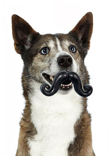 Sit, Stay, 'Stache Pet Toy - Black, Quirky, Good, Solid, Guys, Top Rated, Dog