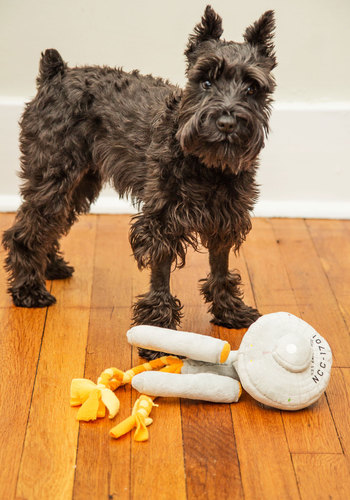 Enterprising Pup Pet Toy - Grey, Sci-fi, Good, Nifty Nerd, Guys, Cosmic, Dog