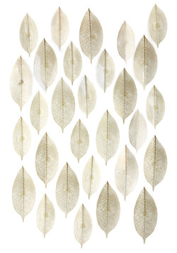 Fancy Fronds Wall Decor Set