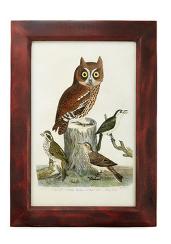 Look Into my Wise Framed Print