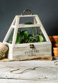 Home Grown Terrarium