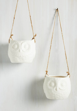 This Must be the Vase Hanging Planter Set